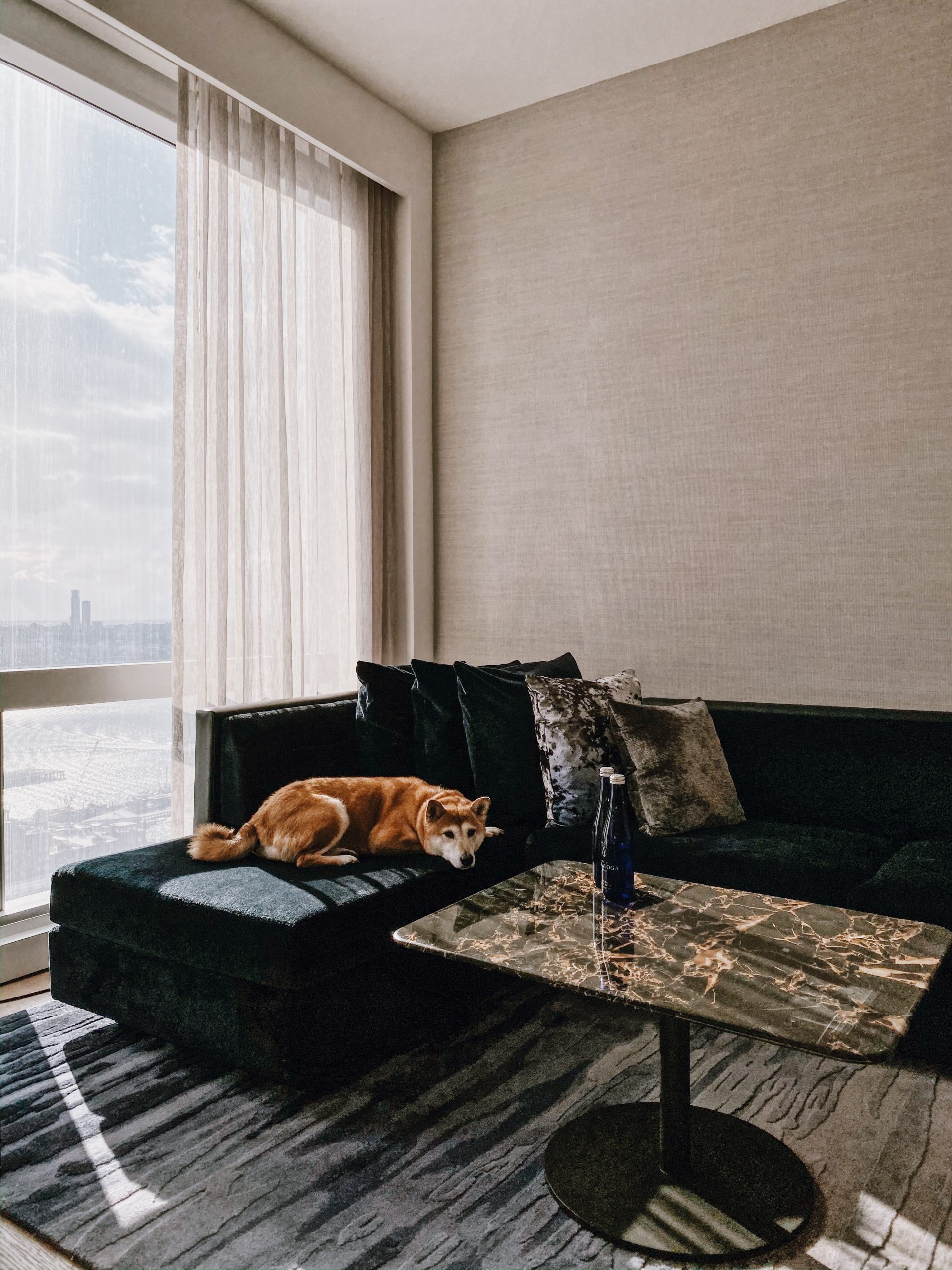 dog curled up on sofa in front of window with river view in junior suite